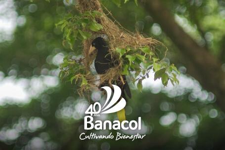 Banacol